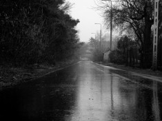 after rain89478473289